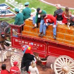 The Budweiser Clydesdales delivered the game ball to Gapper