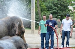 Chris Heisey, Zack Cozart, and Mat Latos spraying an elephant with a hose